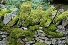 Moss covered stone wall. A moss covered dry stone wall in Derbyshire in England royalty free stock photography
