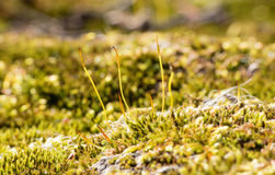 Moss-covered stones Stock Images