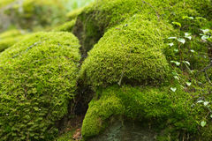 Moss Covered Stones. In the forest royalty free stock images