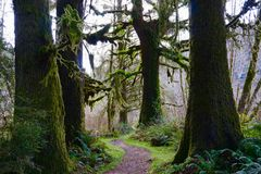 Through a Moss covered trail. Moss covered trail in northern California Stock Image
