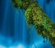 Moss Covered Tree against blue cascade Watson Creek Oregon Royalty Free Stock Photos