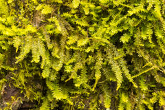 Moss Covered Tree Bark Royalty Free Stock Photography
