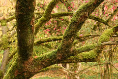 Free Moss-covered Tree Branches And Fall Foliage Royalty Free Stock Photo - 10704705
