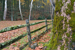Moss covered tree and fence in a autumn leaf covered field Royalty Free Stock Photo