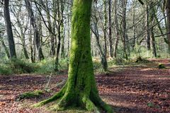 Moss covered tree stock photos