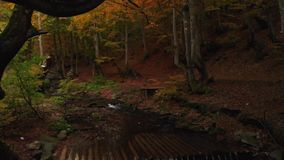 Moss Covered Tree. Mountain River and Waterfall in the Autumn Forest stock video