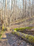 Moss Covered Tree Trunk à la conserve de cascades photographie stock libre de droits