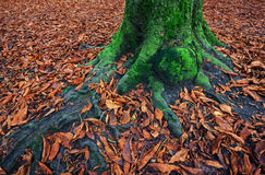 Moss covered tree trunk Stock Photos