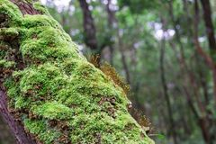 Moss covered tree Stock Photography