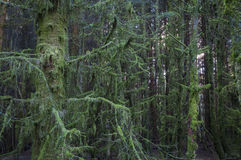 Free Moss Covered Trees Stock Photo - 80396230