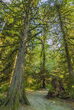 Moss Covered Trees Stock Photo