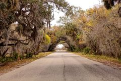 Moss covered trees line a road along the wetland and marsh at th. E Myakka River State Park in Sarasota, Florida, USA Royalty Free Stock Photo