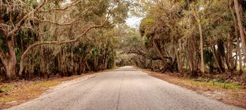 Moss covered trees line a road along the wetland and marsh at th. E Myakka River State Park in Sarasota, Florida, USA Royalty Free Stock Image
