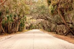 Moss covered trees line a road along the wetland and marsh at th. E Myakka River State Park in Sarasota, Florida, USA Stock Photo