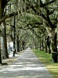 Moss covered trees in Savannah Georgia royalty free stock photography