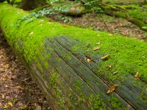 Moss covered trunk Royalty Free Stock Photos