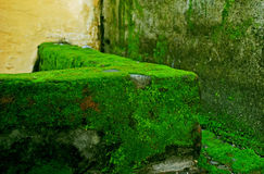 Moss covered wall Royalty Free Stock Photography