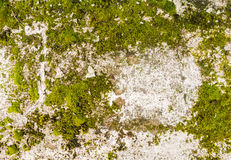 Moss Covered Wall Fotografia Stock