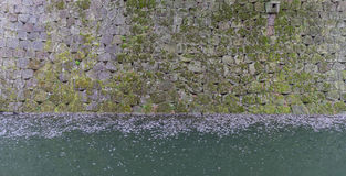 Moss covered walls and the moat filed with fallen Sakura leaves Stock Photography