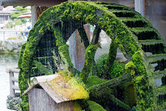 Moss covered waterwheel royalty free stock photo
