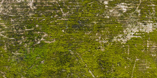 Moss covered weathered board with grain Stock Photos