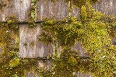 Moss Covered Wood Shingles Royaltyfri Fotografi