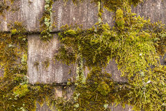 Moss Covered Wood Shingles Royalty Free Stock Photography