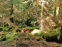 Moss Covering Royalty Free Stock Photos
