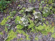 Moss Covering the Rocks Royalty Free Stock Photos