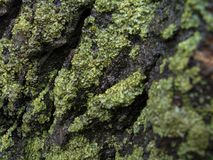 moss covering tree stock photo