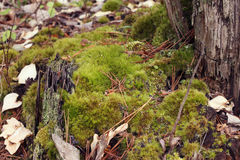 Moss covering a tree stump Royalty Free Stock Photos