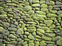 Moss coverred round stone wall Royalty Free Stock Images