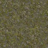 Moss on Cracked Ground with Dry Grass. Stock Photography