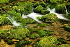 Moss,dam Stock Images