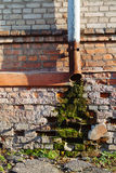 Moss and damp on a brick wall Royalty Free Stock Images