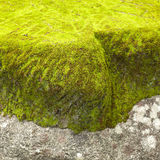 Moss in the deep forest, Thailand Stock Photos