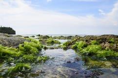 Moss On der Felsen mit starkem Wasserwelle bei Ebbe Strand in Bali Stockbilder