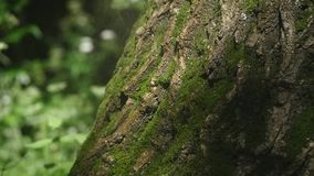 Moss detail on the bark of a tree. Selective focus stock video footage