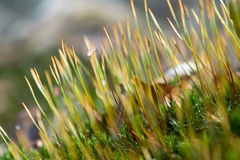Moss detail Royalty Free Stock Photography