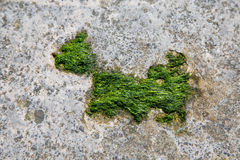 Moss dog Stock Images
