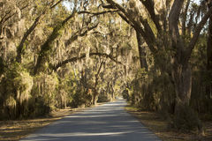 Moss draped trees at Harris Neck National Wildlife Refuge, Georg. Live oak trees draped with Spanish moss make for an iconic scene from the deep South near the Royalty Free Stock Photos