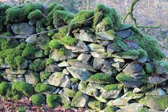 Moss on dry stone wall Royalty Free Stock Photo