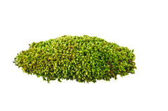Moss. Dug up soil with moss on white background Royalty Free Stock Photography