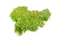 Moss. Dug up soil with moss on white background Royalty Free Stock Image