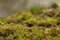Moss in early spring Stock Images