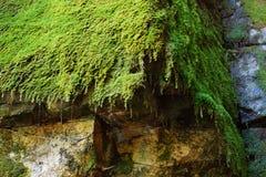 Moss edge Stock Photography