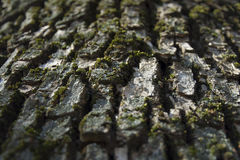 Moss on the elm bark Royalty Free Stock Photography