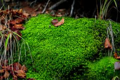 Moss in the enchanted forest Royalty Free Stock Image