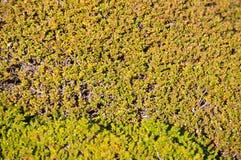 moss för bakgrundsräkningsjordning Arkivfoto