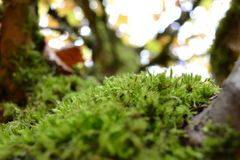 Moss In Fall photo libre de droits
